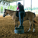 Building your confidence with your horse