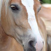 Understand your horse
